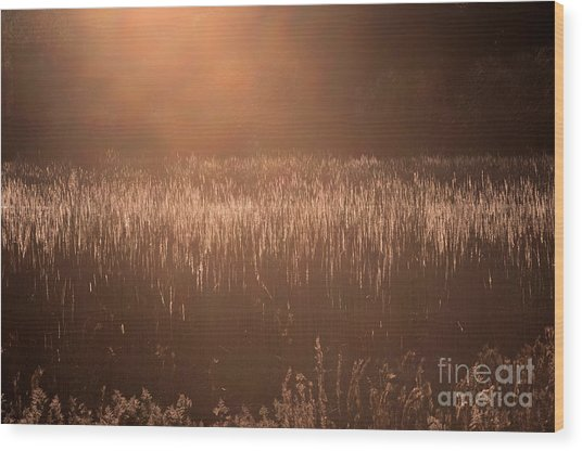 Quiet Evening Light Wood Print