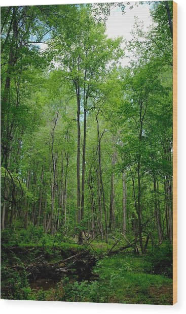Wood Print featuring the photograph Quiet by Ryan Shapiro