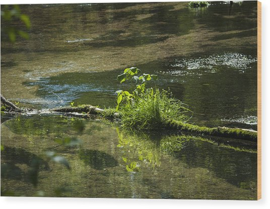 Quiet Trout Stream Wood Print