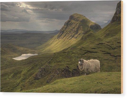 Quiraing Sheep Wood Print