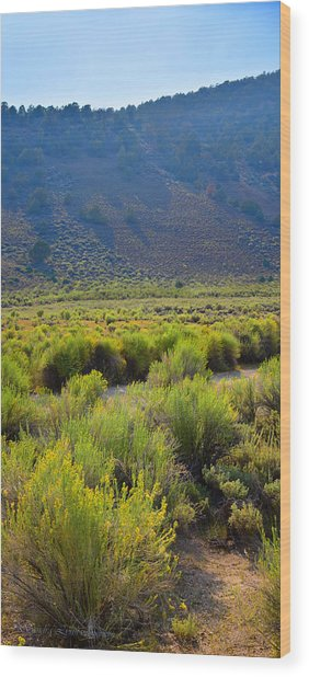 Rabbit Brush In Bloom Wood Print