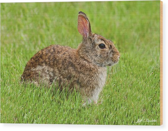 Rabbit In A Grassy Meadow Wood Print