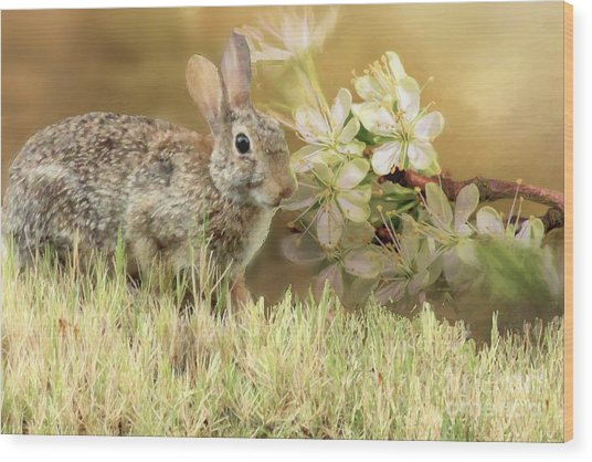 Eastern Cottontail Rabbit In Grass Wood Print