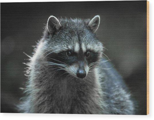 Raccoon 2 Wood Print