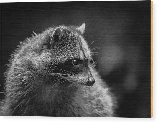 Raccoon 3 Wood Print