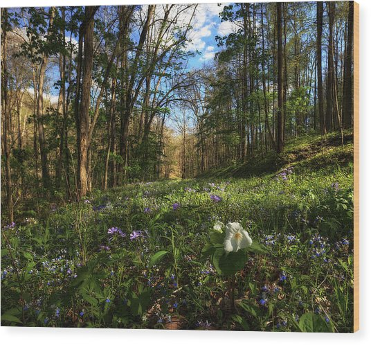 Raccoon Creek Flowers Wood Print