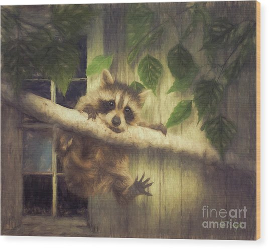 Raccoon Hangin' Around Wood Print by Tim Wemple