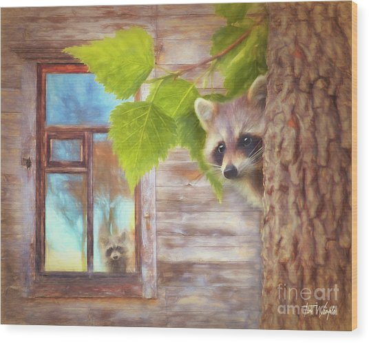 Raccoon Lookout Wood Print by Tim Wemple