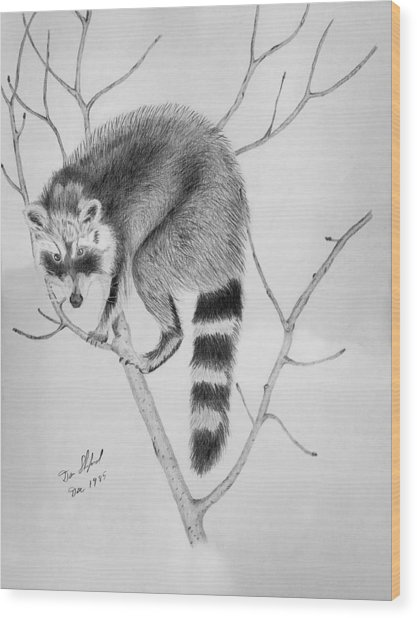 Raccoon Treed  Wood Print by Daniel Shuford