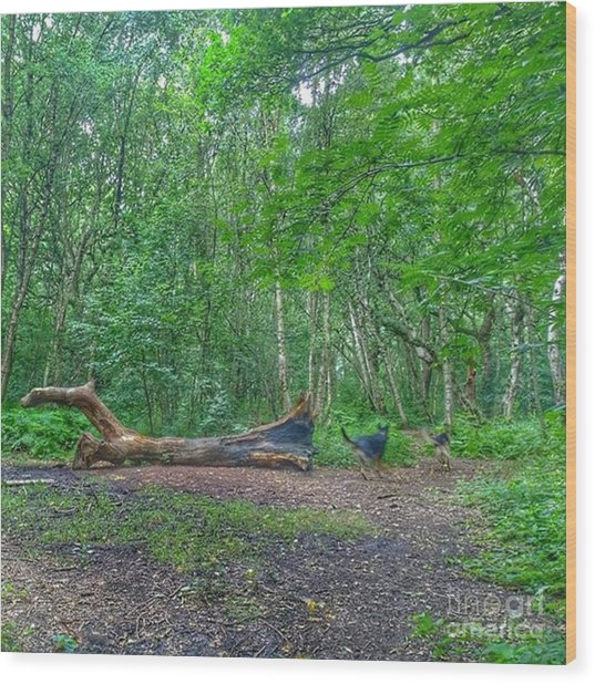 Racing Around The Downed Tree Wood Print
