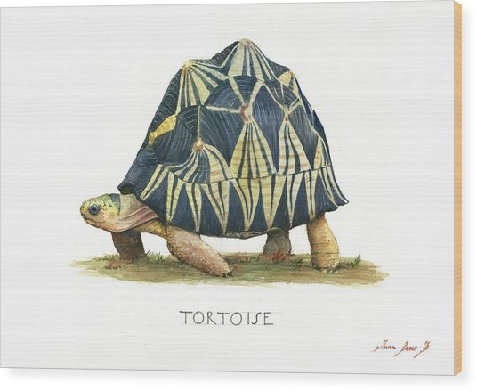 Radiated Tortoise  Wood Print