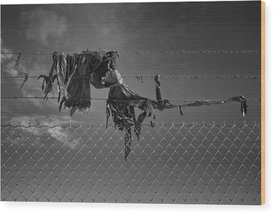 Ragged On A Fence Wood Print