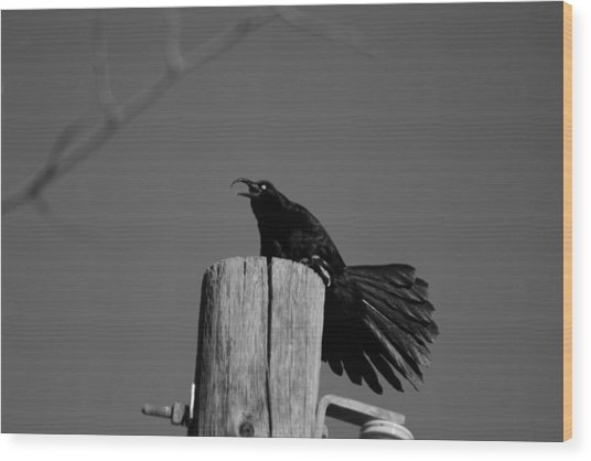 Raging Crow Wood Print