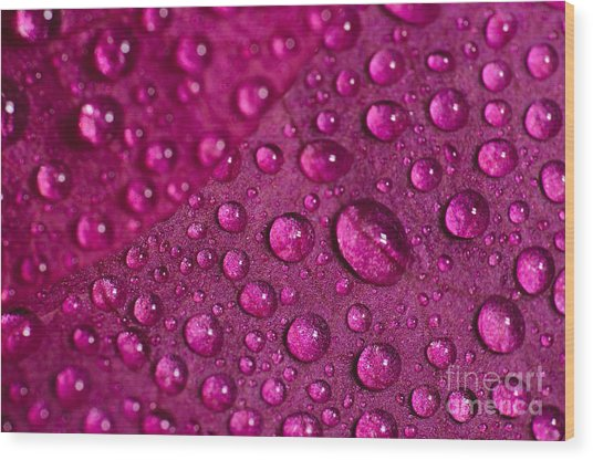 Rain And Bougainvillea Petals Wood Print