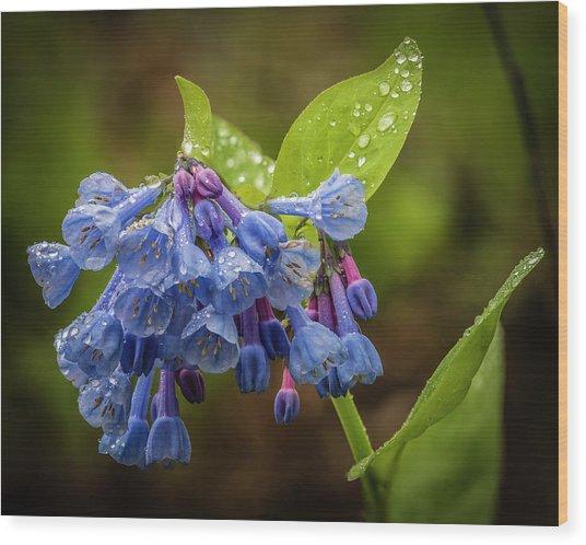 Rain Drop Bells Wood Print