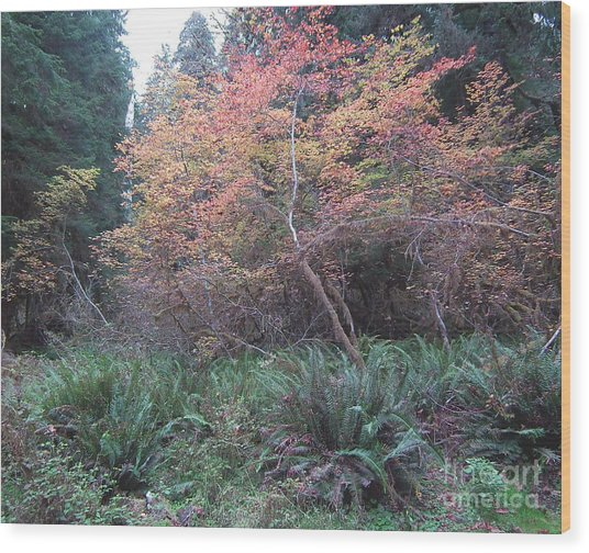 Rain Forest Fall Wood Print