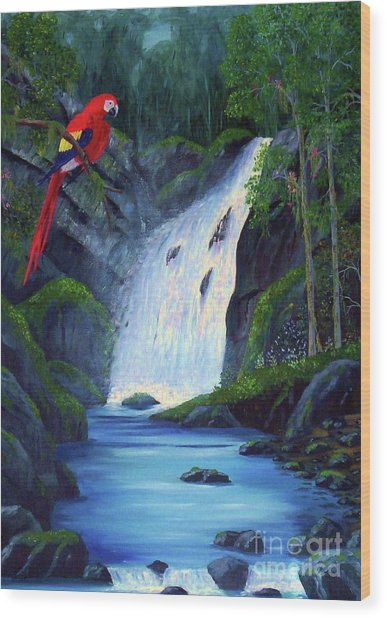 Rain Forest Macaws Wood Print