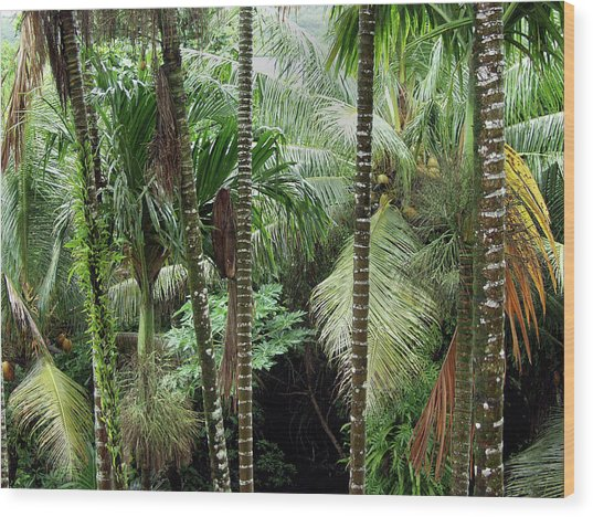 Rain Forest Palau Wood Print