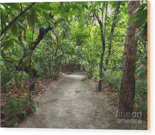 Rain Forest Road Wood Print