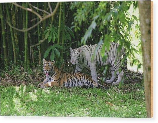 Rain Forest Tigers Wood Print