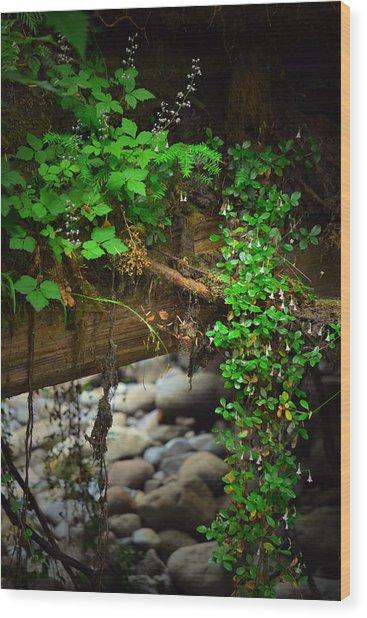 Rain Forest Walk Wood Print