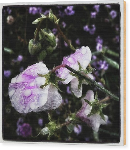 Wood Print featuring the photograph Rain Kissed Petals. This Flower Art by Mr Photojimsf