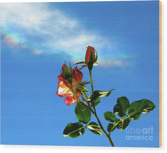 Rainbow Cloud And Sunlit Roses Wood Print