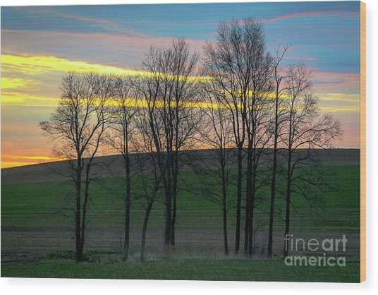 Rainbow Color Tree Horizon Wood Print