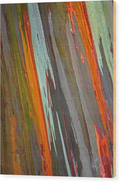 Rainbow Eucalyptus Tree Wood Print