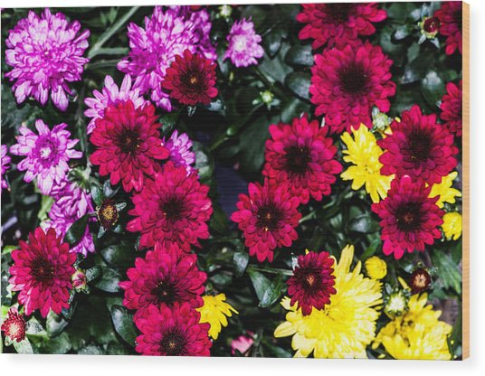Rainbow Of Color Flowers Wood Print
