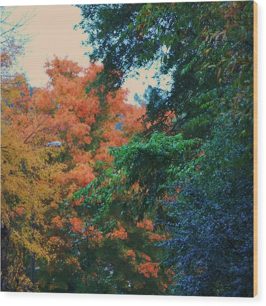 Rainbow Of Fall Wood Print by Trudi Southerland