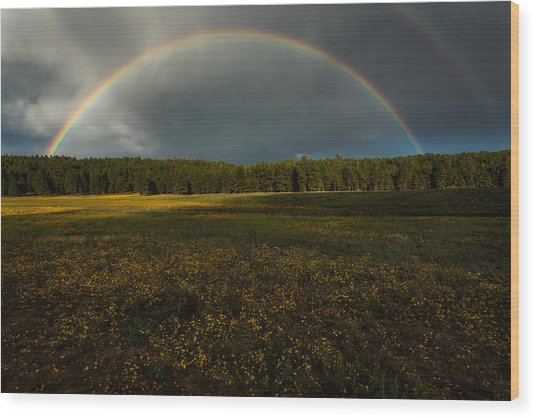 Rainbow Over The Forest Wood Print