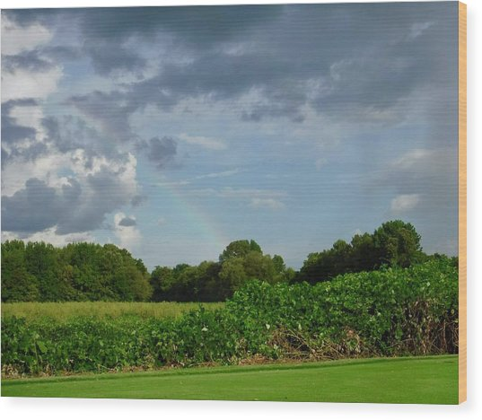 Rainbow Over Wedgewood Wood Print