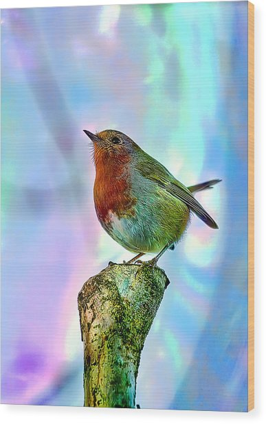 Rainbow Robin Wood Print by Gouzel -