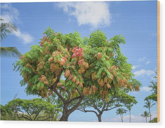 Wood Print featuring the photograph Rainbow Shower Tree 1 by Jim Thompson