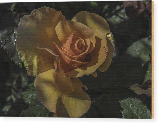 Raindrop Rose Wood Print