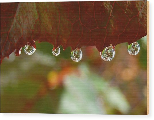 Raindrops On A Red Leaf Wood Print