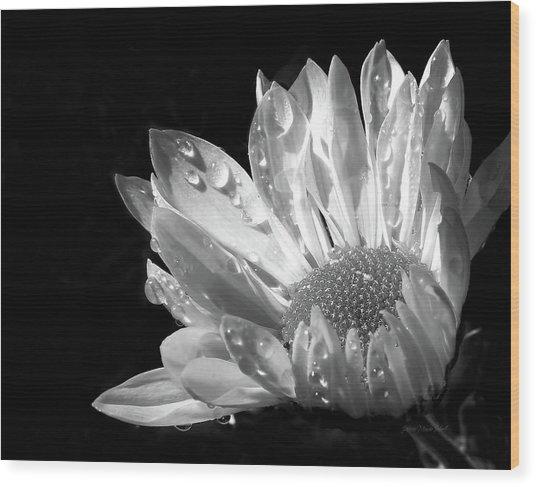 Raindrops On Daisy Black And White Wood Print