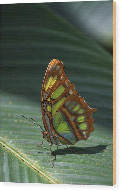 Rainforest Butterfly Wood Print