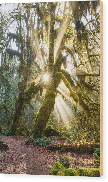 Rainforest Magic Wood Print