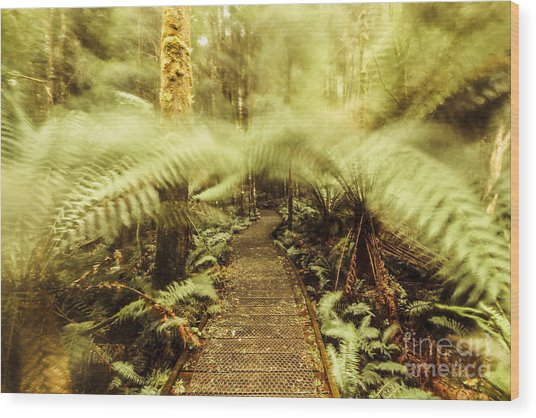 Rainforest Walk Wood Print
