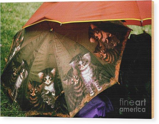 Raining Cats  Wood Print by Steven Digman