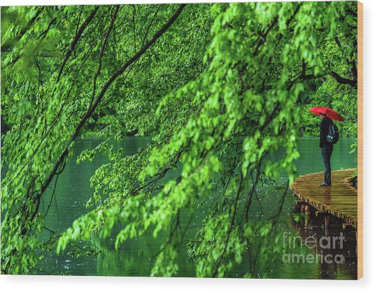Raining Serenity - Plitvice Lakes National Park, Croatia Wood Print