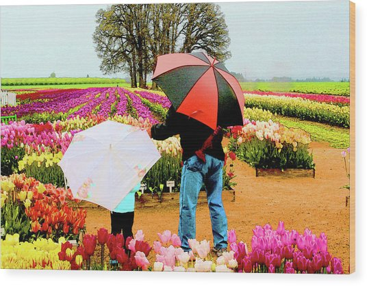 Rainy Day At The Tulip Farm Wood Print