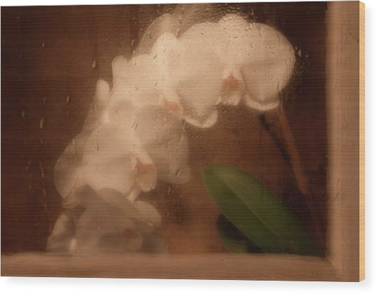 Rainy Day Orchid Wood Print