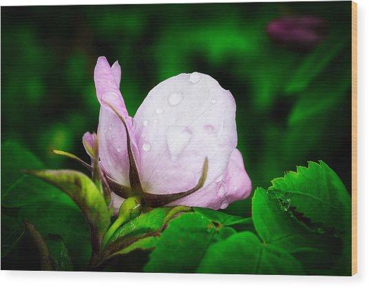 Rainy Day Rose Number 2 Wood Print