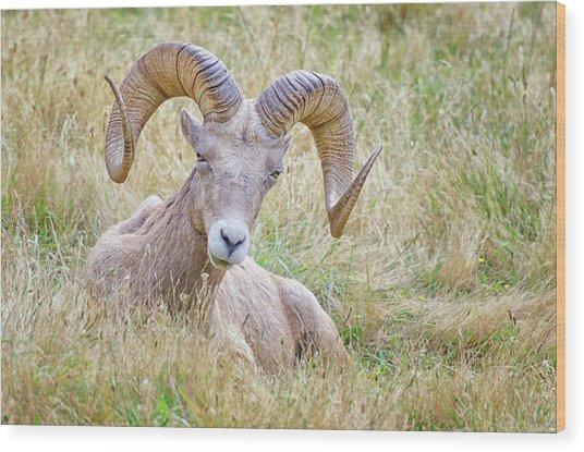 Ram In Field Wood Print