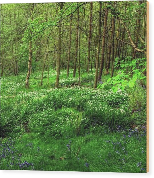 Ramsons And Bluebells, Bentley Woods Wood Print