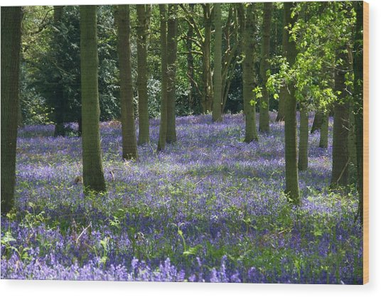Randan Woods Wood Print