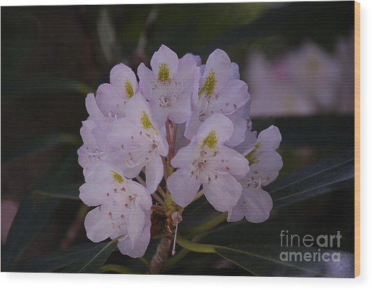 Randolph County Rhododendron Wood Print